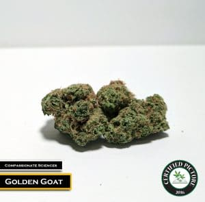Golden Goat by Compassionate Sciences