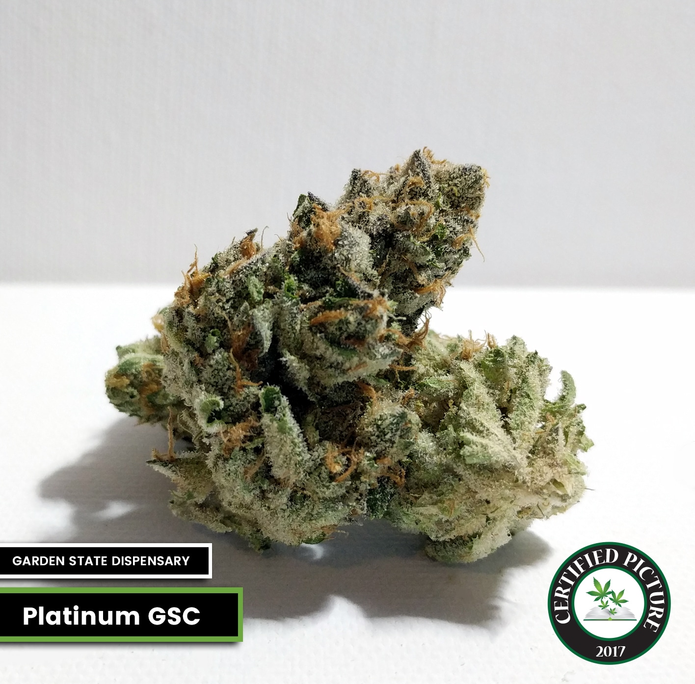 Platinum Girl Scout Cookies Strain Info Mmp Directory