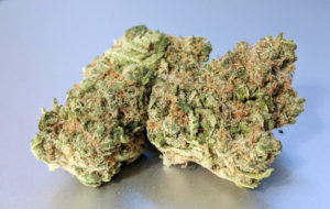 Platinum Girl Scout Cookies Strain Image 5